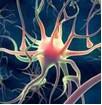neuroni seri